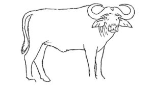 imagenes de bufalos de agua