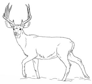 imagenes de ciervos para imprimir