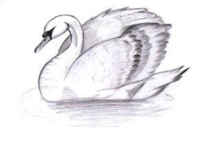 imagenes de cisnes hermosos