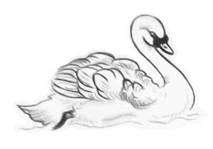 imagenes de cisnes para colorear