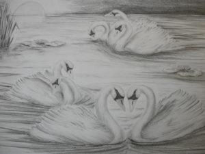 imagenes de cisnes para dibujar