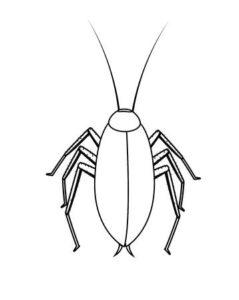 imagenes de cucarachas animadas