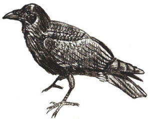 imagenes de el cuervo