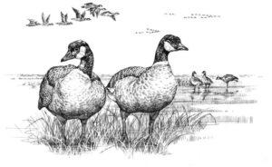 imagenes de gansos animados