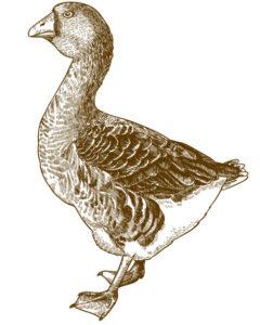 imagenes de gansos enamorados