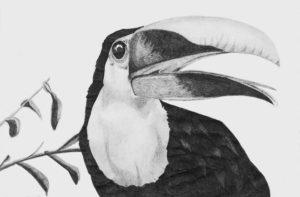 imagenes de tucanes en caricatura