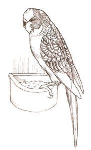 imagenes de un loro para dibujar