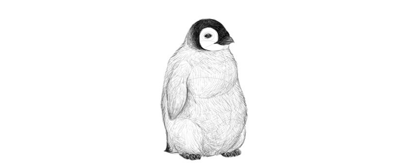 pinguino dibujo para colorear