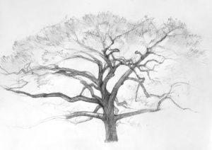 como dibujar un arbol para niños