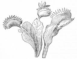cuantos tipos de plantas carnivoras existen