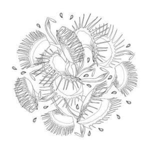 dibujos de las plantas carnivoras