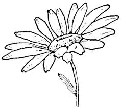 dibujos de margaritas para colorear