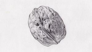 dibujos para colorear de frutos secos