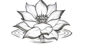 flor de loto animada