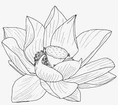 flor de loto dibujo para tatuaje