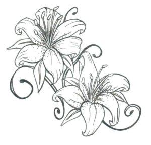 flores de lirios fotos
