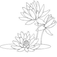 flores margaritas imagenes