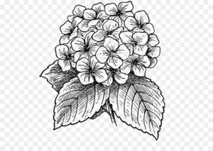 flores para dibujar faciles
