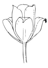 flores tulipanes fotos