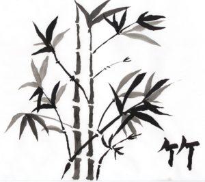 fotos bambu