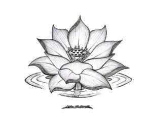 fotos de flor de loto