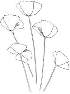 fotos de flores para dibujar