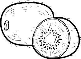 fotos kiwi animal