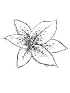 imagen flor azucena