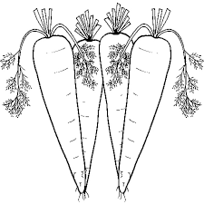 imagen zanahoria