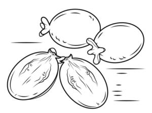 imagenes de arbol de guayaba