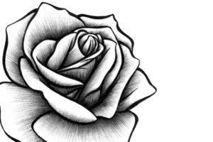 imagenes de dibujos de rosas