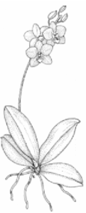 imagenes de orquideas hermosas