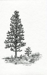 imagenes de pinos de navidad para colorear