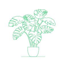 imagenes de plantas con flores