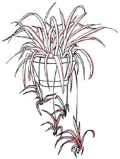 imagenes de plantas de interior