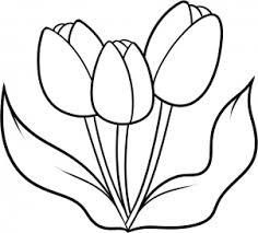 imagenes de tulipanes rosas
