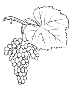 imagenes de uvas para colorear