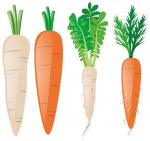 imagenes de zanahorias infantiles
