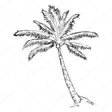imagenes palmeras tropicales