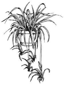 lamina de plantas medicinales