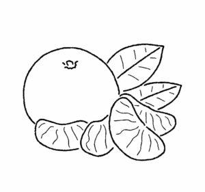 mandarina en dibujo