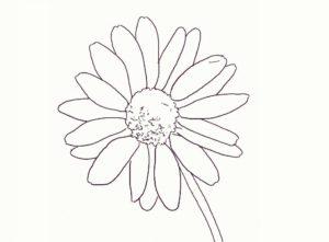 margaritas imagenes flores