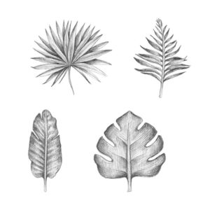 palmeras para dibujar