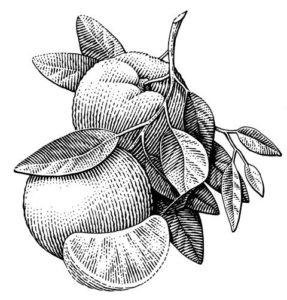 pinturas de frutas