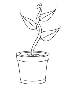 plantas medicinales dibujos
