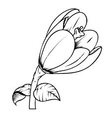 tulipanes fotos