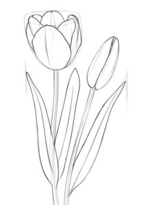 tulipanes imagenes