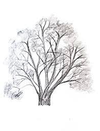 un arbol para dibujar