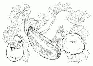 vegetales para colorear